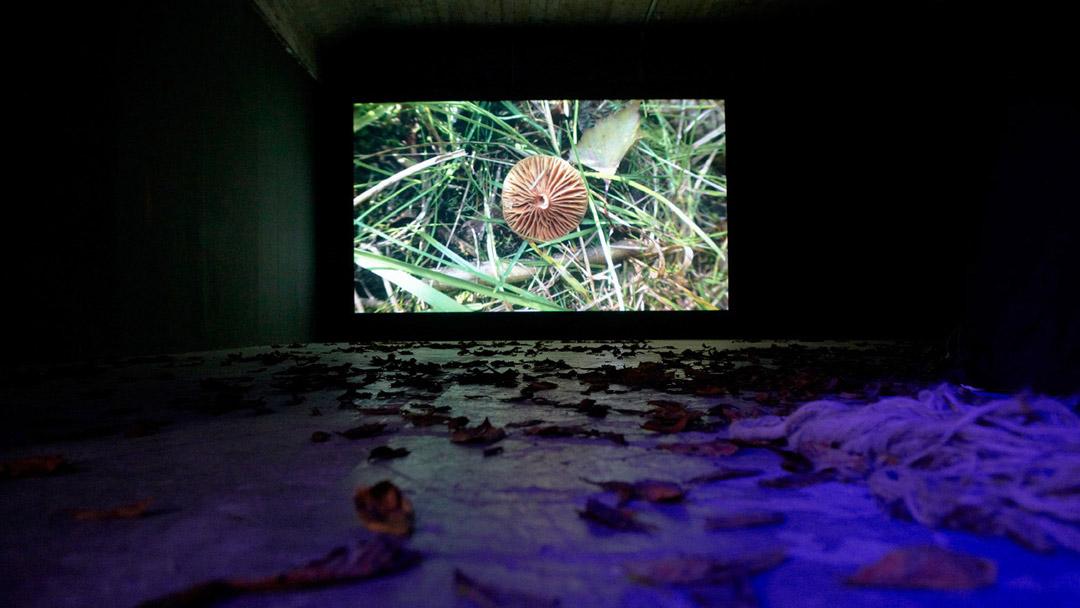 Lauschen&Lauern, installation view4, ©Barbara_Hartmann